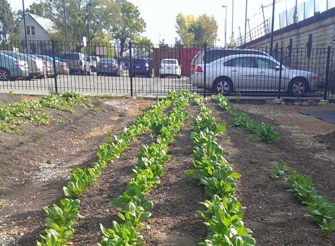 Vacant Lots to Garden Plots